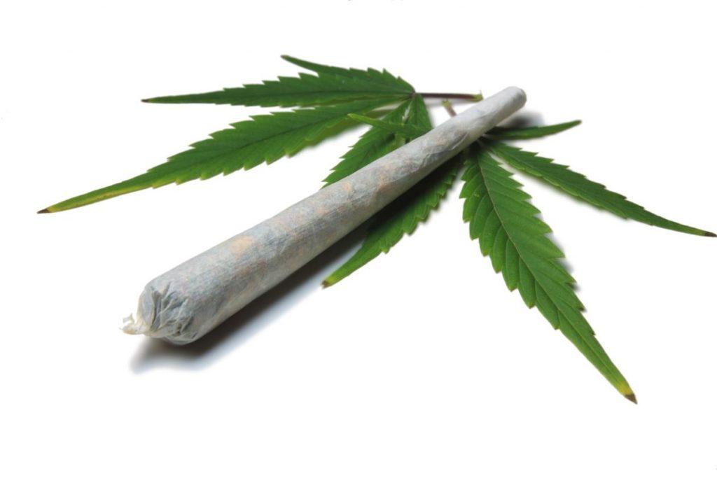 Budderweeds is better than Aurora Cannabis
