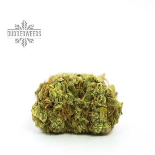 ACDC-marijuana strain-budderweeds