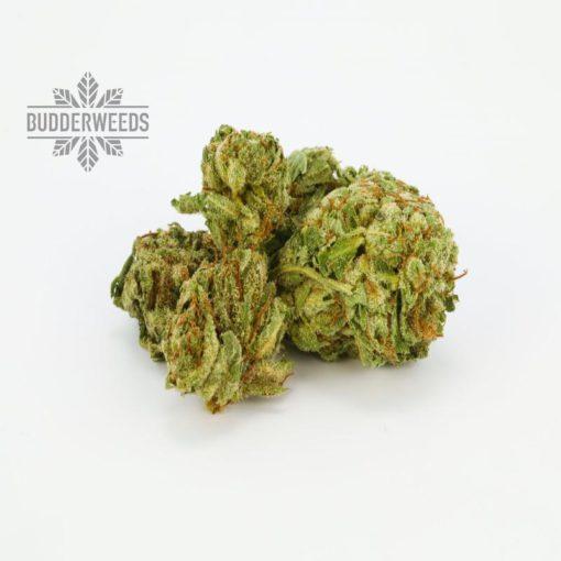 $100-OG-Marijuana-Strain