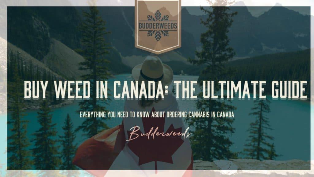 buy-weed-canada-ultimate-guide